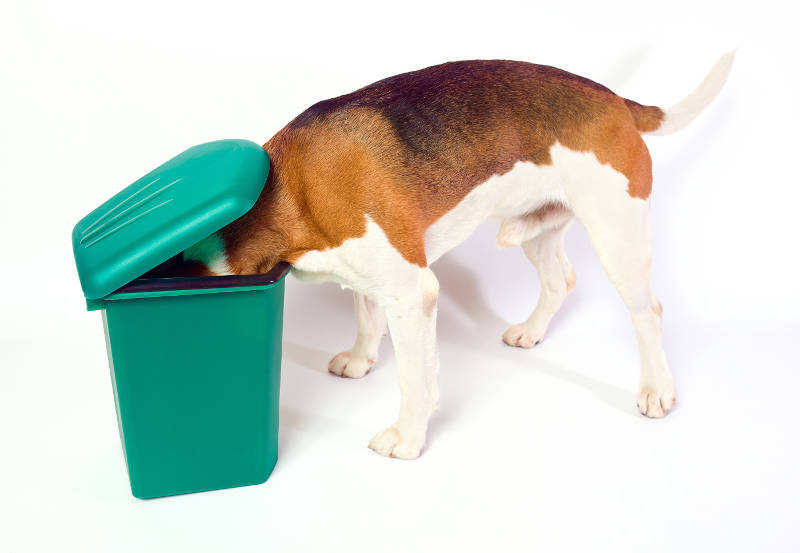 dog in garbage
