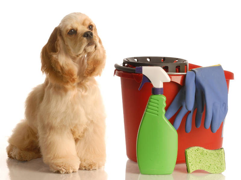 cleaning products by a dog