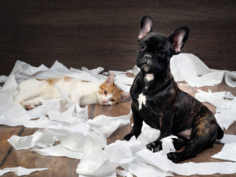 dog and cat that played with toilet paper