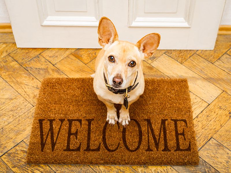 doors for pets
